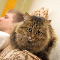Кошак :: Ольга Овсянникова