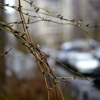 весенний дождь :: Виктория Жуланова