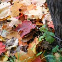 Осень... :: Дина Нестерова