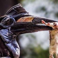Рогатый ворон :: Nn semonov_nn