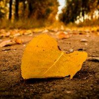 Осенний лист :: Евгений Колёс