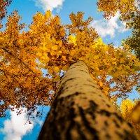 Осень небо голубое ... :: Евгений Колёс