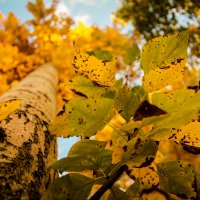 Осень :: Евгений Колёс