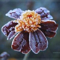 Нечаянно пришла зима... :: Людмила Шустова