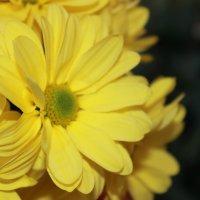 квіточка :: Mihaylo Shovkun