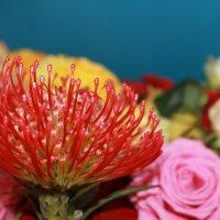 незнайома мені квітка :: Mihaylo Shovkun