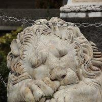 спящий лев (Воронцовское имение) :: Ольга Коломина