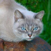 Голубые глаза :: Анастасия Д
