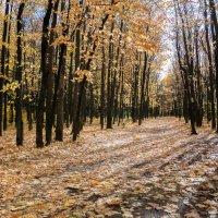 осень :: Alexsei Melnikov