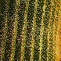 Кактус растение :: Lidiya Dmitrieva