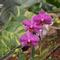 цветок :: марк шайман