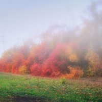 Утро туманное :: Serge Golos