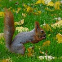 Осень наступила... :: Ольга