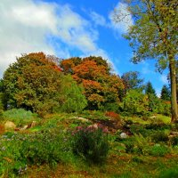В Старом ботаническом парке :: Ростислав
