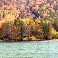 Осенняя Катунь... :: Лариса Карпушина