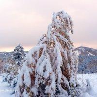 5 октября, суббота, снежное утро в Хакасии (5) :: MaOla ***