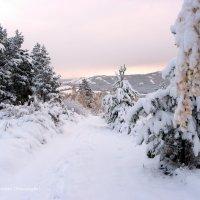 5 октября, суббота, снежное утро в Хакасии (4) :: MaOla ***