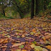 Вновь приходит художница-осень... :: Павел Зюзин