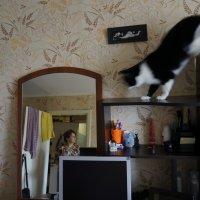 В поисках кошки. :: Валерий Молоток