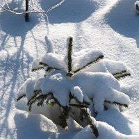 Маленькой ёлочке холодно зимой :: Drew Foto-Drow
