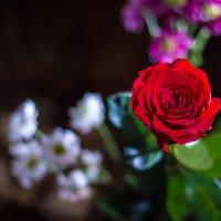 Роза. :: Артур Моргун