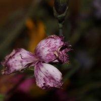цветочек :: Tanechka Shavyrina