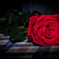 Роза :: Женя Хмыров