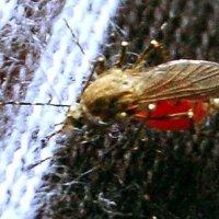 комар :: Юра Заикин