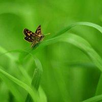 Бабочка :: Наталия Чаус