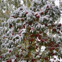 Снежное покрывало :: Светлана