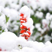 Зимний наряд :: Светлана