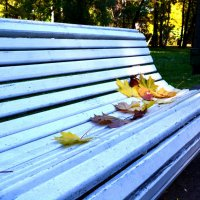 autumn :: Dmitriy Silin