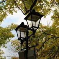 наступила осень :: Алена Сухарева