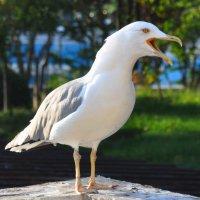 чайка :: Oksana