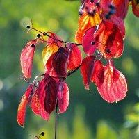 листья.солнце.осень. :: юрий иванов