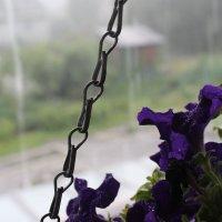 Летний дождь :: Лида Подволоцкая