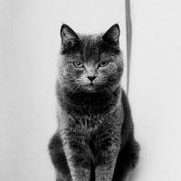 кошка :: Ольга Попова