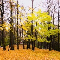 Осень :: Елена Решетникова