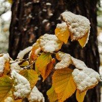 первый снег :: Олег Мокрушев