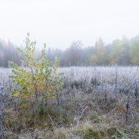 Первый заморозок. :: Валерий Молоток