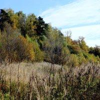 Осенний пейзаж около Подольска :: Геннадий Мельников