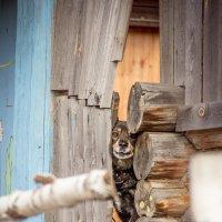 Любопытная собачонка :: Epicaste Venorae