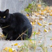 Жил да был чёрный кот за углом :: Ольга Sad