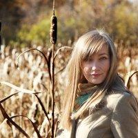 Golden fall :: Alice Vermilion
