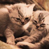 Meow :: Alice Vermilion