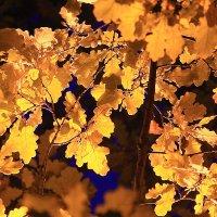 Осенним вечером, вечером, вечером, когда вне дома, вроде, делать было нечего :: Михаил Лесин