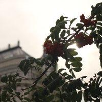 настроение августа :: Eugenia Sorokina