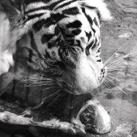 Король зоопарка г.Екатеринбург :: Julia Grif