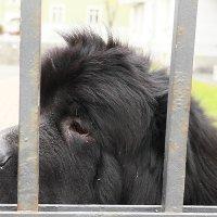 Собачье одиночество :: Михаил Лесин