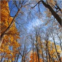 Осень в Царицино :: Ренат Менаждинов